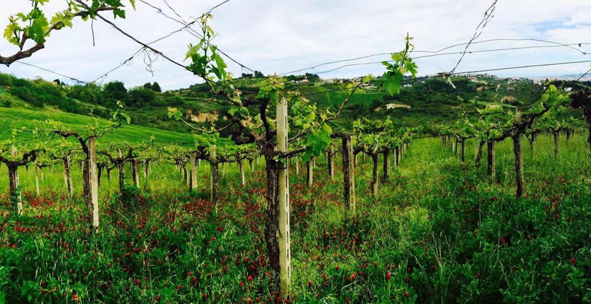 vigna-montesilvano
